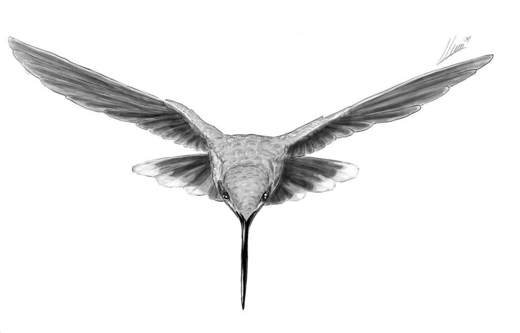 Google aggiorna i suoi algoritmi, parliamo di Hummingbird